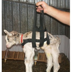 Lamb weighing strap