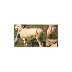 Prolaps harness for ewe