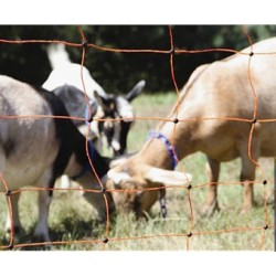 Orange electrified netting - Goat