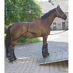 Boarding strap for horse